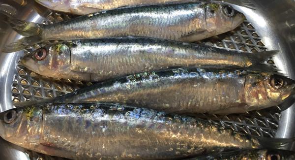 Cuando pite que está a temperatura colocamos las sardinas